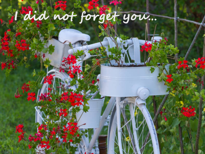 I did not forget you…
